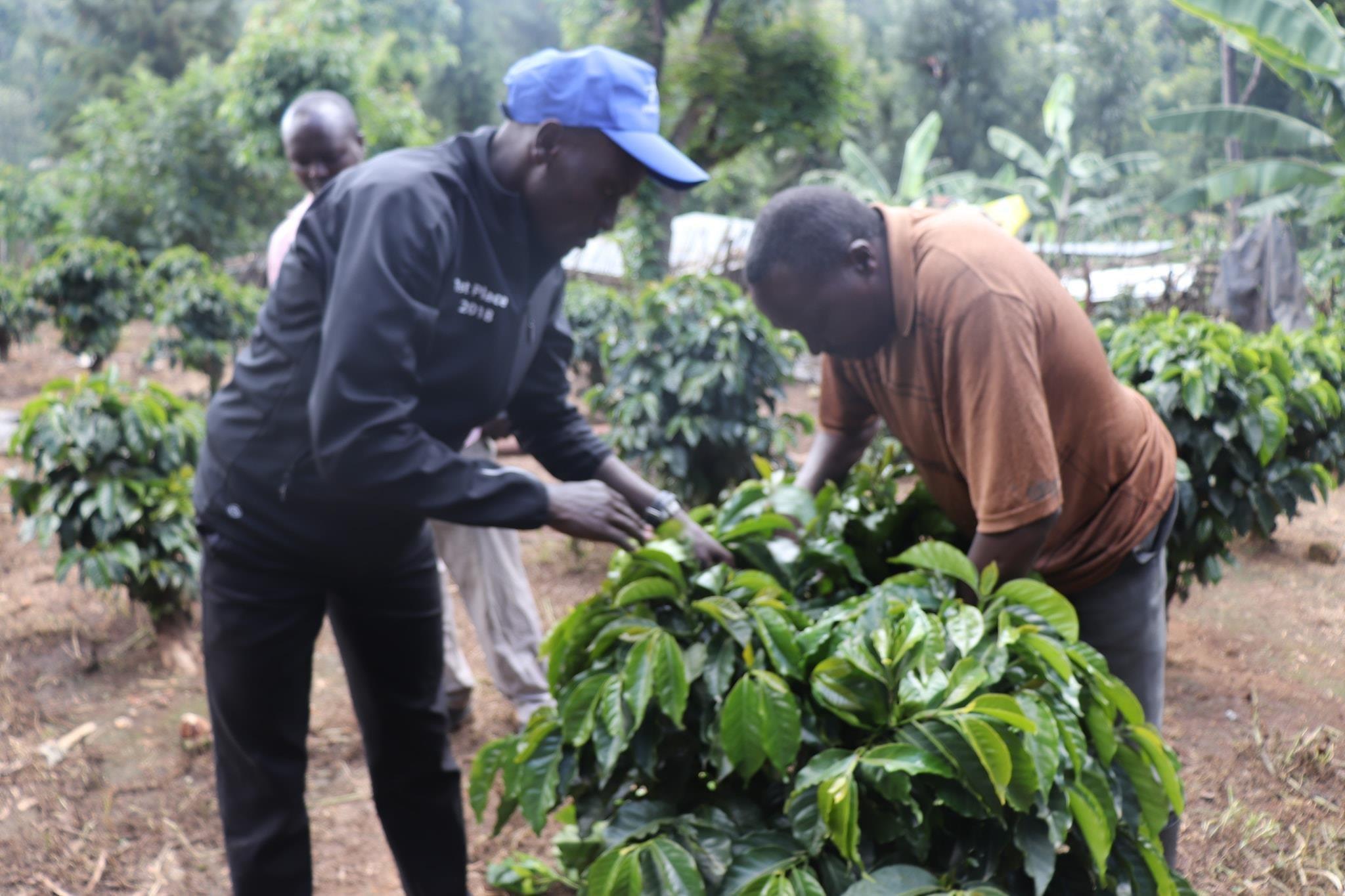 How Kimbia Coffee hit the ground running