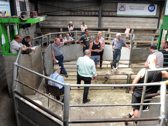 Summer show and sale of livestock, sheep and cattle at Holmfirth Attested Auction Mart. This photograph was taken in 2019 pre Covid-19. Picture: Tony Johnson/Yorkshire Post Newspapers