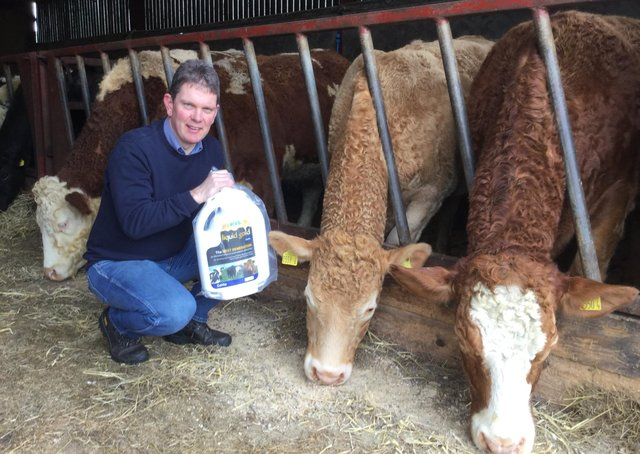 Paul O'Hare, from Mayobridge, with cattle been dosed at housing with Liquid Gold Cattle