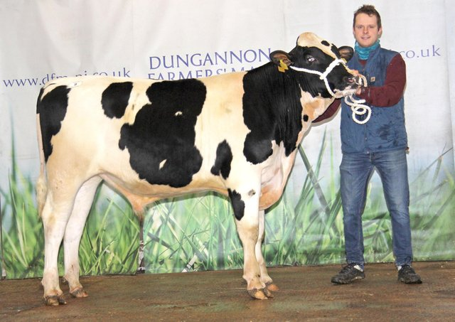 Andrew McLean exhibited Relough Danisck PLI £552 sold for 3,000gns at Dungannon.