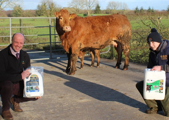 Paul Elwood, HVS Animal Health and Kile Diamond, from Pointhouse Limousins. In the background is Pointhouse Jewel, whose two ET sons did so well at the recent Carlisle pedigree Limousin sale