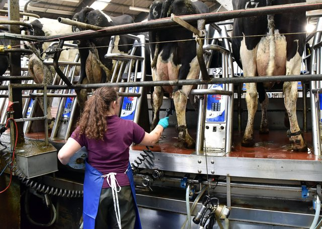 The best way to prevent environmental mastitis is to minimise the number of bacteria that can cause mastitis, at the teat end