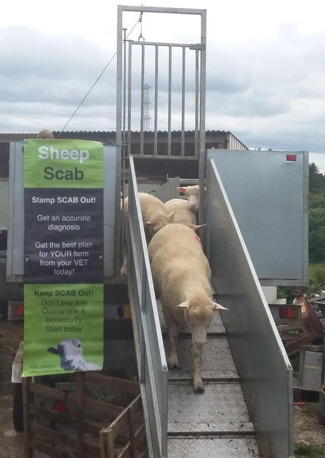 The Northern Ireland Sheep Scab Survey