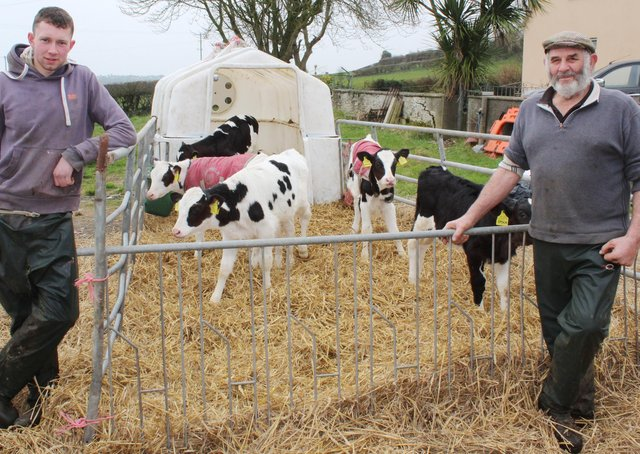 The use of sexed semen will allow Cavan Johnston and Matthew Adams tobuild up cow numbers over the coming years