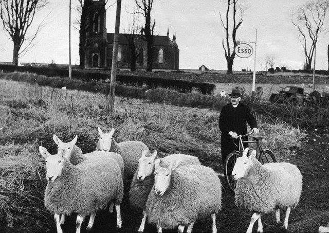 The famed Dervock preacher, sheepbreeder and storyteller the Reverend Robert John McIlmoyle with one of his 'flocks'. His other 'flock' was his congregation at Knockavallen. He was for a long time minister at the Reformed Presbyterian Church at Knockavallen