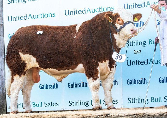 Knockreagh Kiloy ET sold for 10,000gns, setting a new herd record for Rostrevor-based herd owners Val and Conrad Fegan.