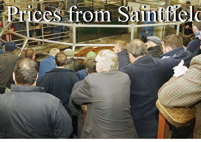 Saintfield Cattle Market, Friday 3rd October, 2008. Pictures: Diane Magill