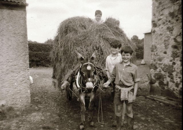 """Many thanks to Farming Life reader Jonathan McCullough for sending this brilliant old photograph. Jonathan writes: """"Pictured at the front is Raymond Uprichard farming in the 1960s in Corceeny, using his donkey, which he did until a tractor became available. Also behind him, his brother Dynes, and Philip Smyth on top of the hay cart."""" If you have an old farming photograph that you would like to share with Farming Life, get in touch via email at darryl.armitage@jpimedia.co.uk"""