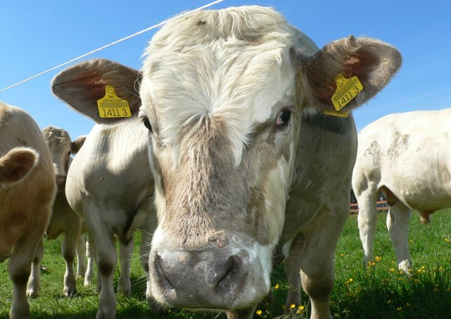 Over the past few years farm incomes have been extremely low for the beef and sheep sectors in both lowland and less favourite areas. This low profitability has created several significant challenges for the beef and sheep sectors