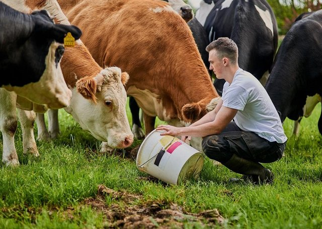 Full length shot of a young male farmer feeding the cows on his dairy farm