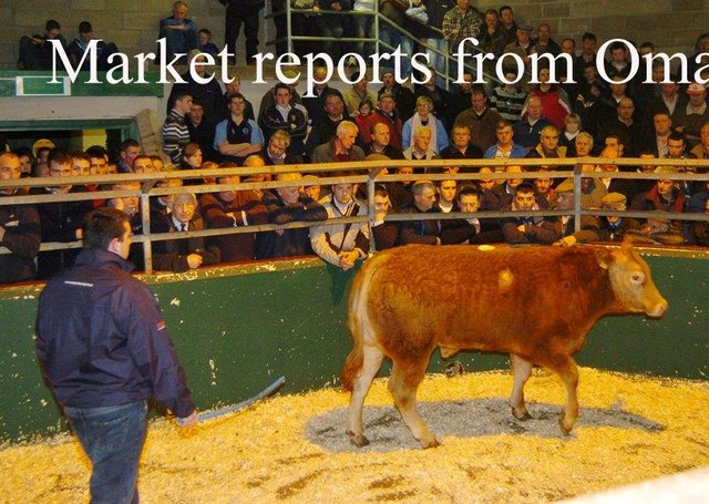 Filled to the rafters - the scene during the annual Christmas Fatstock show and sale in Omagh Auction mart.