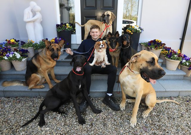 Joshua Ryans from Gilford loves nothing more than relaxing after work at his new job by walking his family's seven dogs. Usel's STRIDE Project, which supported 75 people with disabilities to find employment during the pandemic, is launching a series of free events in May aimed at helping to get more people into work.