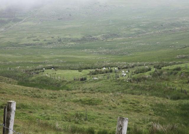 Purple Moorgrass habitat.
