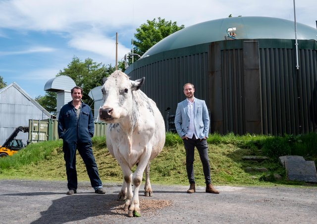 Josh Riddett with a benevolent cow