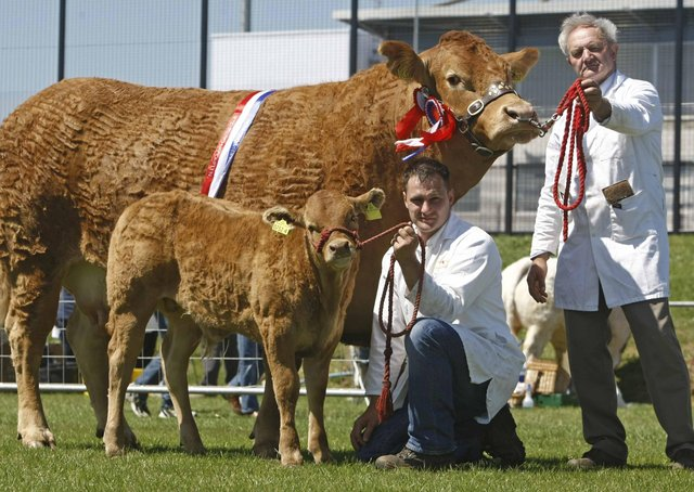 Herbie and Stephen Crawford with Champion Limousin at Ballymena Show on Saturday. Pic Steven McAuley/Kevin McAuley Photography Multimedia