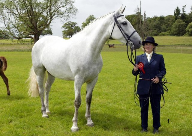 """Shirley Hurst from Lisbellaw, with """"Milhollaw Starlet"""" belongining to C & V Coulter, Castlederg,  winner of the Brood RID mare class at Enniskillen Horse and Pony Show."""