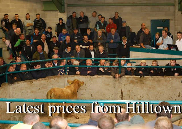 A packed ringside at the NI Charolais Cattle Suckled Calf Show and Sale in Hilltown Mart. Photograph: Columba O'Hare