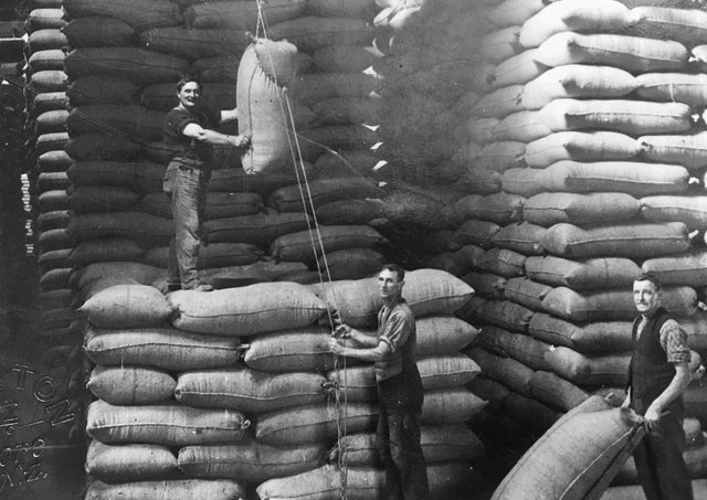 David Mark, formerly of Cabra, Newry at work in New Zealand finishing stacking 19,330 bags of oats. To discover more about migrants like David plan to visit The Ballance House New Zealand Museum and Event Centre this summer. Photograph supplied by Donal Clarke.