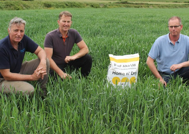Keith Freeburn (right) from Freeburn Farm Feeds discussing the benefits of Home n' Dry with Loughgall farmers David (left) and Stephen Kane