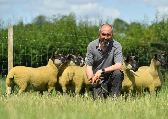 James Alexander is hosting his annual on-farm breeding sheep sale on Saturday 31st August at 88 Gloverstown Road, Randalstown. Over 1000 head will go under the hammer, and are considered to be the best selection the Jalex sheep enterprise have offered to date.
