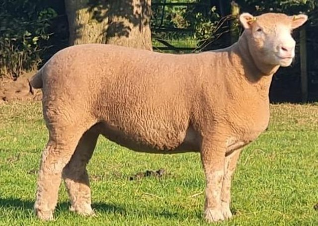R&F Mckeown lot 174 sold for 1700gns