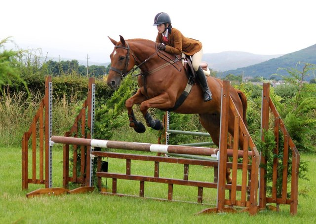 H Steele jumping in the Working Hunter classes