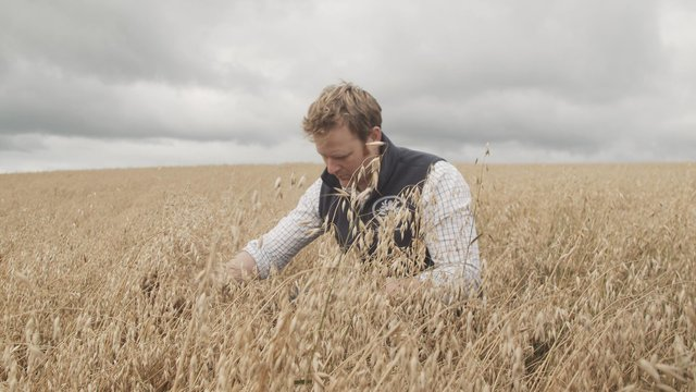 As part of a farmer's co-operative White's puts farmers and oat growing at the heart of its business and understands that quality starts in the field